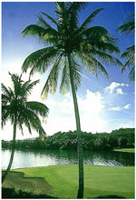 golf-martinique.jpg